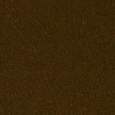293923 HV16156 554 Kiwi by Robert Allen