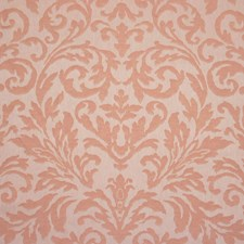 34695-5 Ambrogio Apricot LMSTK18 by Clarence House
