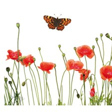 CR-53002 Poppies And Butterflies Border Decal by Brewster