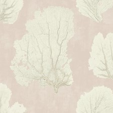VA1210 Coral Couture by York